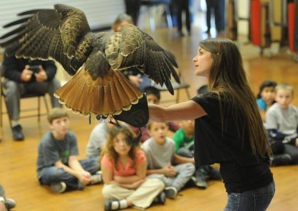 woman holding a raptor in front of an audience